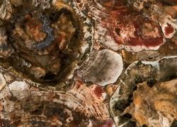 кварцевый агломерат CAESARSTONE CONCETTO 8330 Petrified Wood
